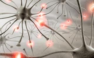 Предназначение гормонов и их функции