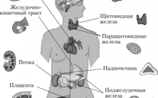 Как гормоны влияют на организм человека