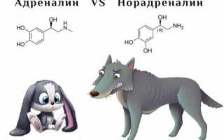 Адреналин и норадреналин — гормоны страха и ярости: влияние на человеческий организм